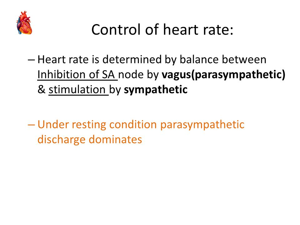 Control of heart rate: Heart rate is determined by balance between Inhibition of SA node by vagus(parasympathetic) & stimulation by sympathetic.