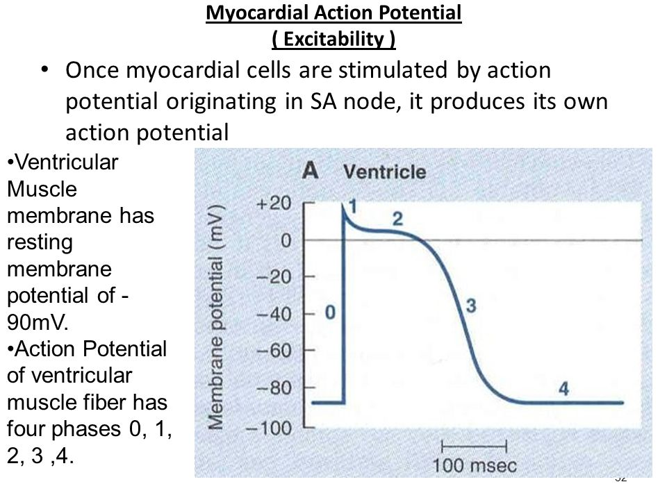 Myocardial Action Potential ( Excitability )