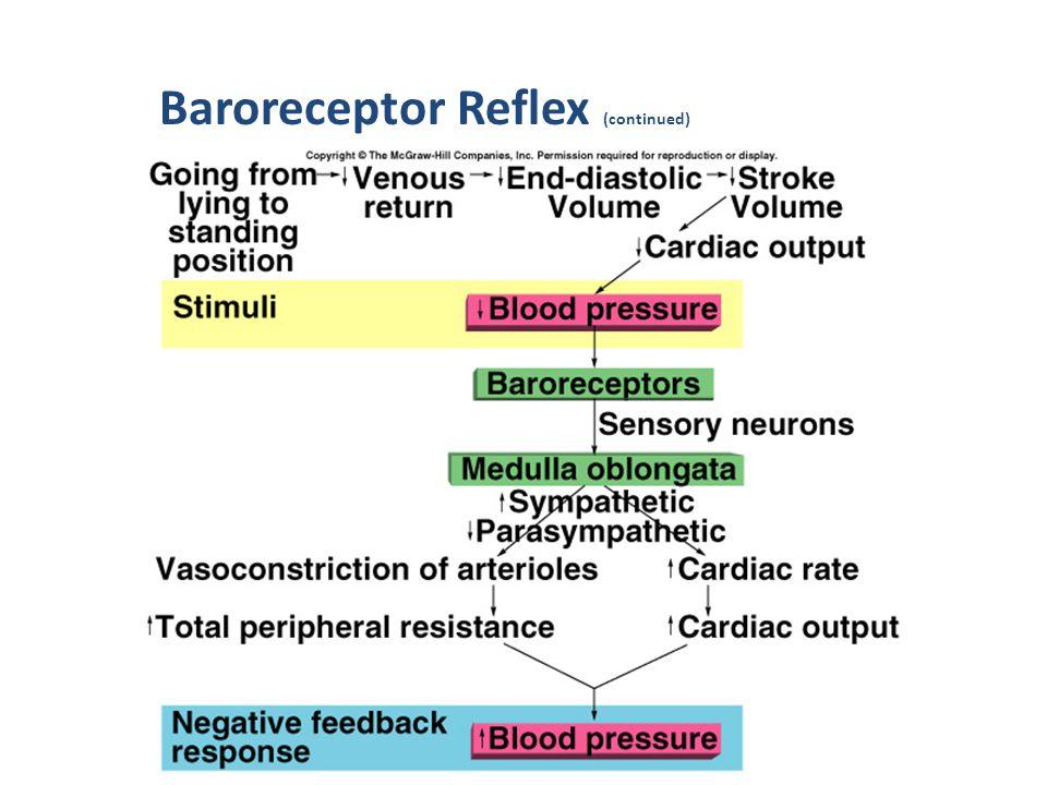 Baroreceptor Reflex (continued)