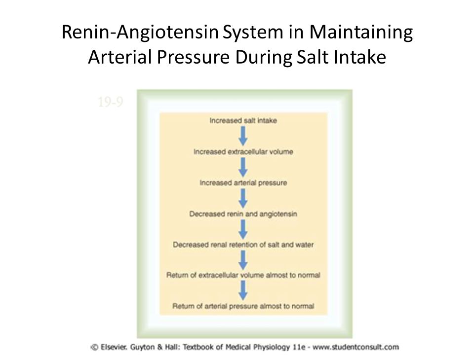 Renin-Angiotensin System in Maintaining Arterial Pressure During Salt Intake