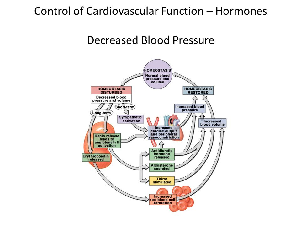 Control of Cardiovascular Function – Hormones Decreased Blood Pressure