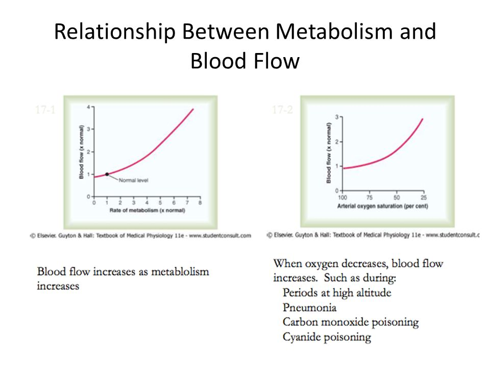 Relationship Between Metabolism and Blood Flow