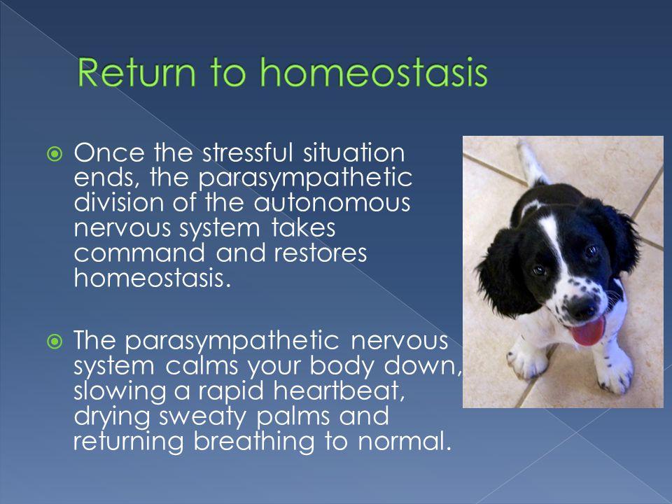 Return to homeostasis