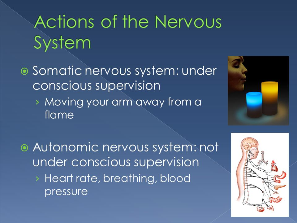 Actions of the Nervous System