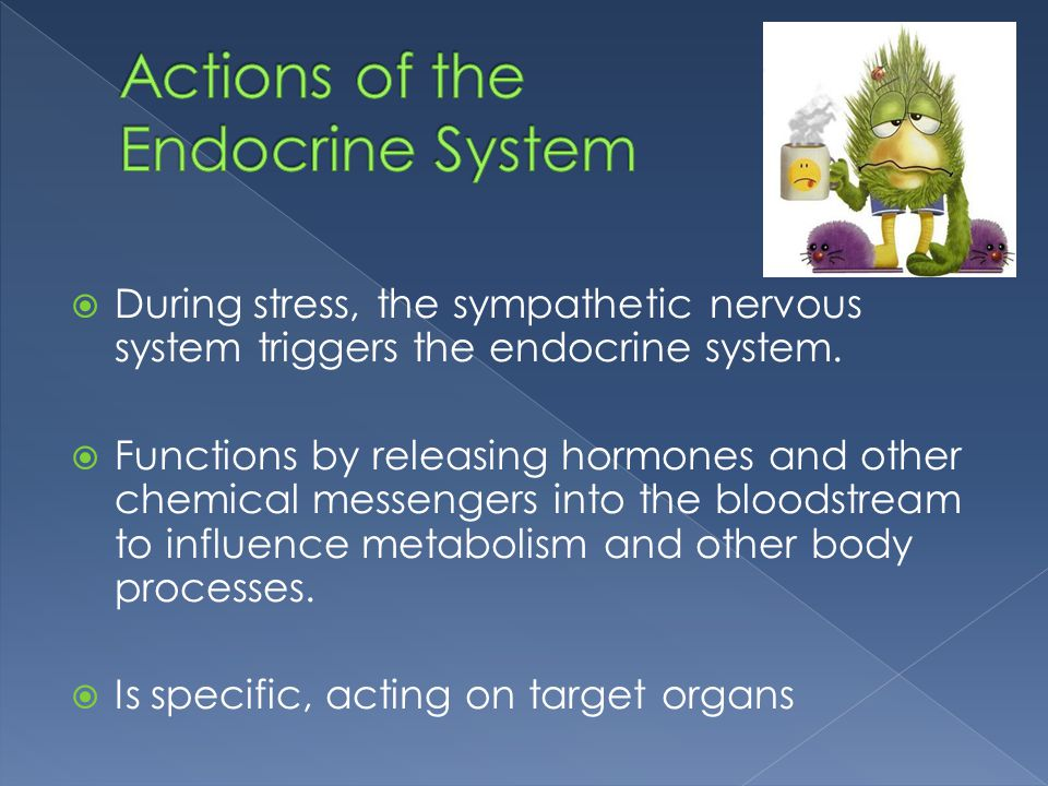 Actions of the Endocrine System