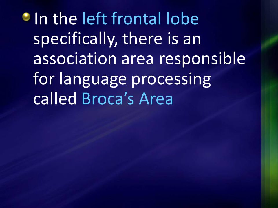 In the left frontal lobe specifically, there is an association area responsible for language processing called Broca's Area