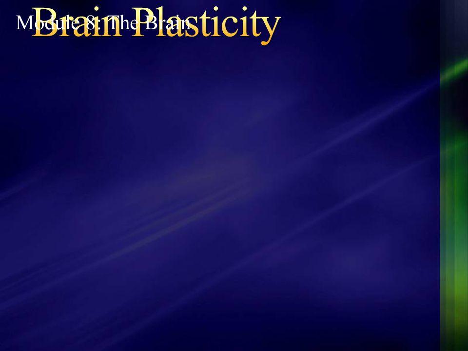 Brain Plasticity Module 8: The Brain