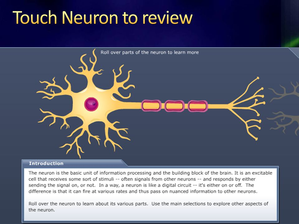 Touch Neuron to review http://www.childrenshospital.org/research/_neuron/index.html.