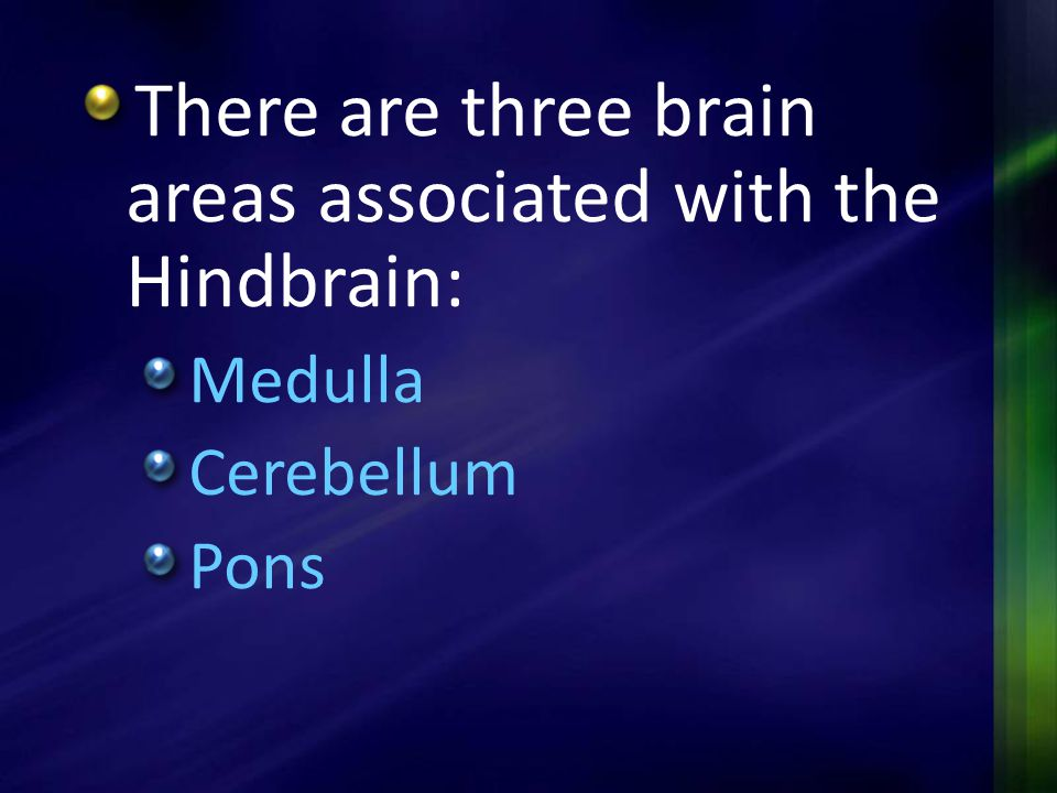 There are three brain areas associated with the Hindbrain: