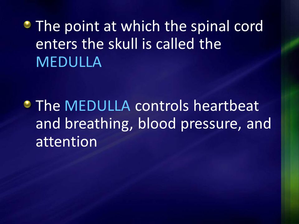 The point at which the spinal cord enters the skull is called the MEDULLA