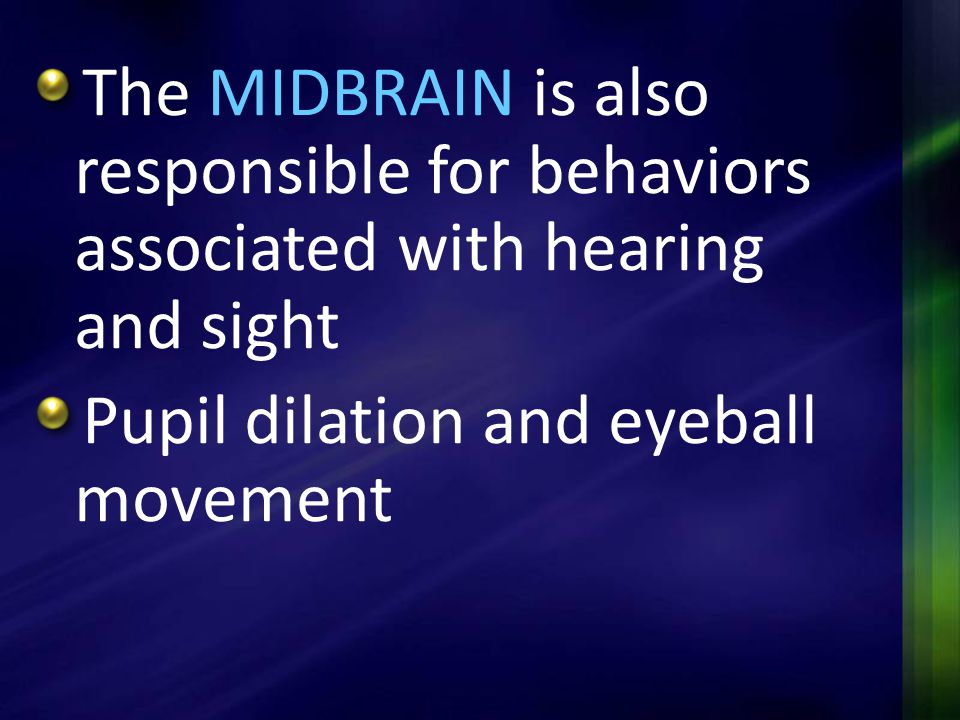 The MIDBRAIN is also responsible for behaviors associated with hearing and sight