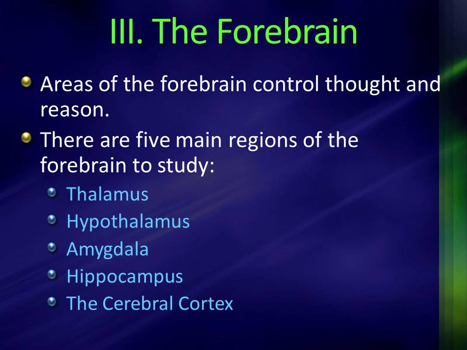 III. The Forebrain Areas of the forebrain control thought and reason.