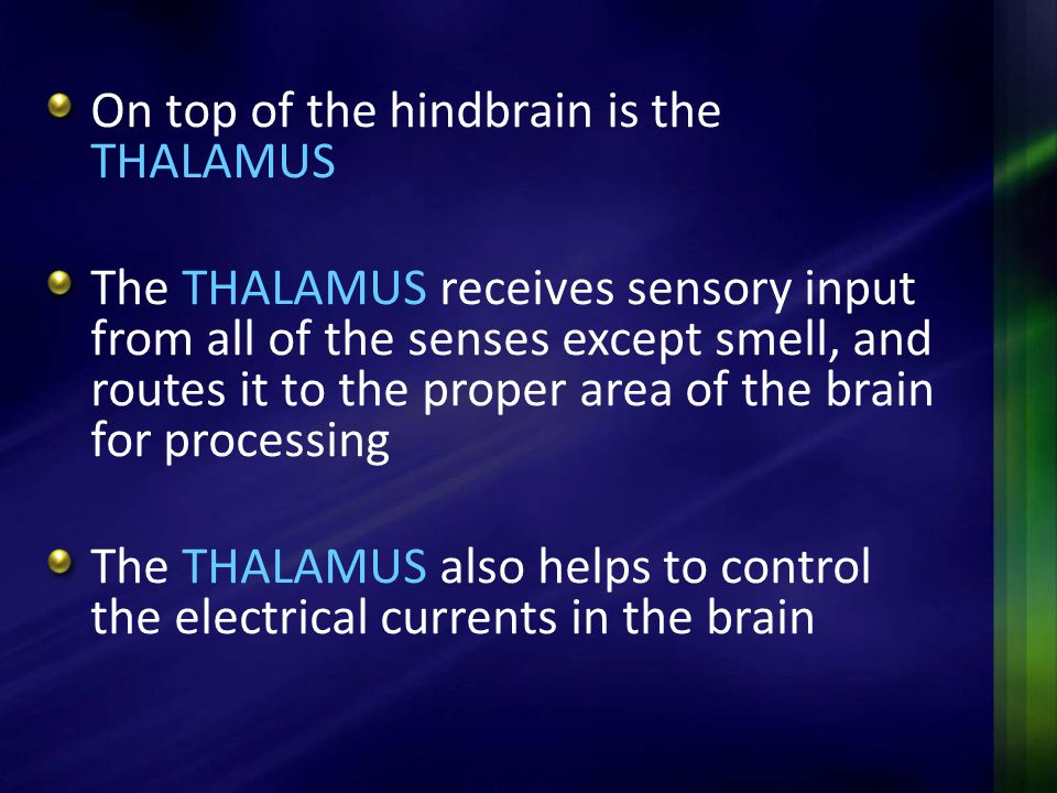 On top of the hindbrain is the THALAMUS