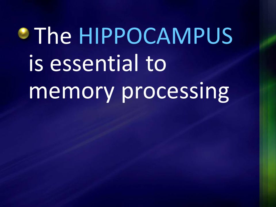 The HIPPOCAMPUS is essential to memory processing