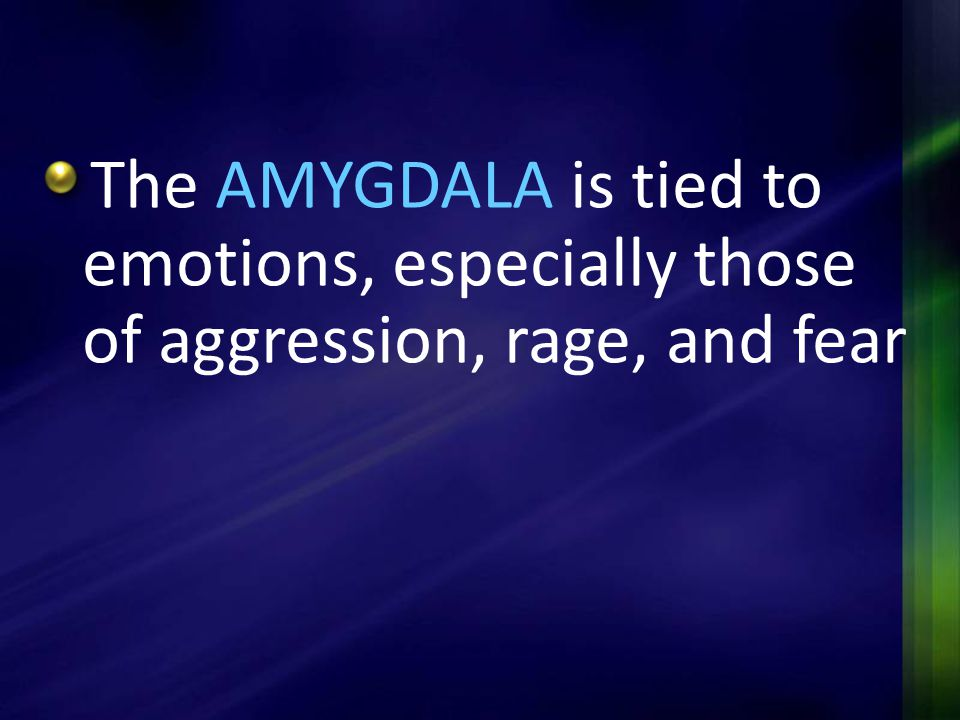 The AMYGDALA is tied to emotions, especially those of aggression, rage, and fear