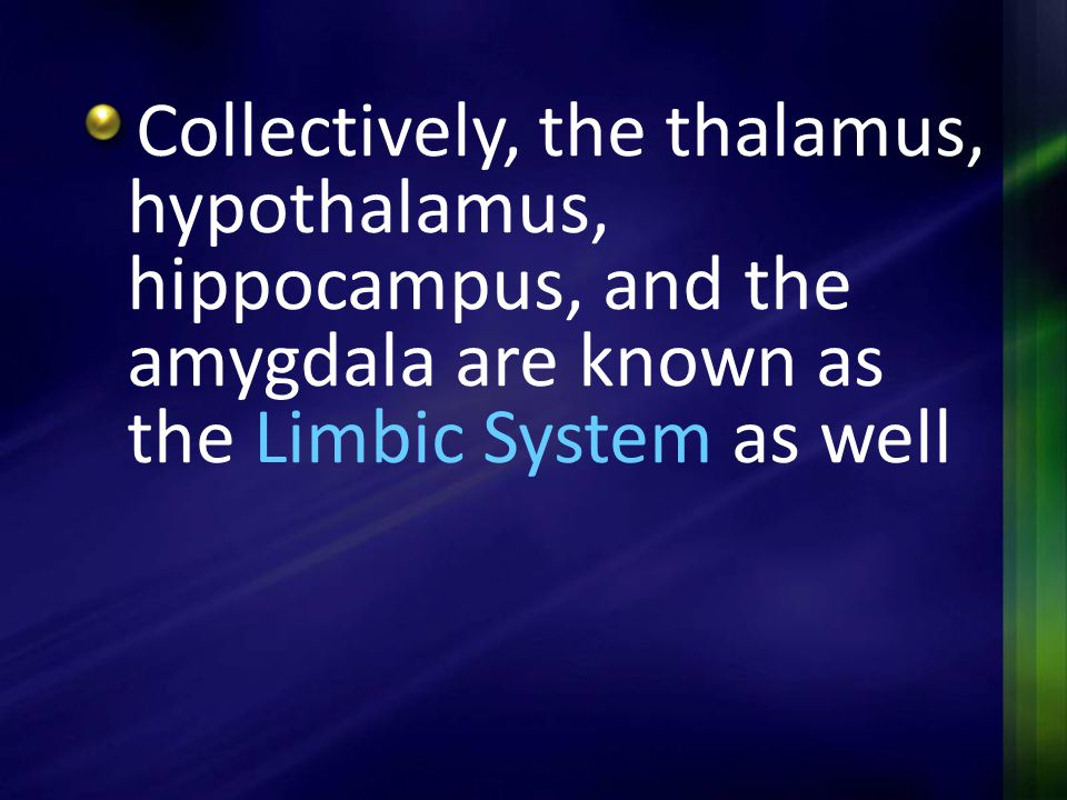 Collectively, the thalamus, hypothalamus, hippocampus, and the amygdala are known as the Limbic System as well