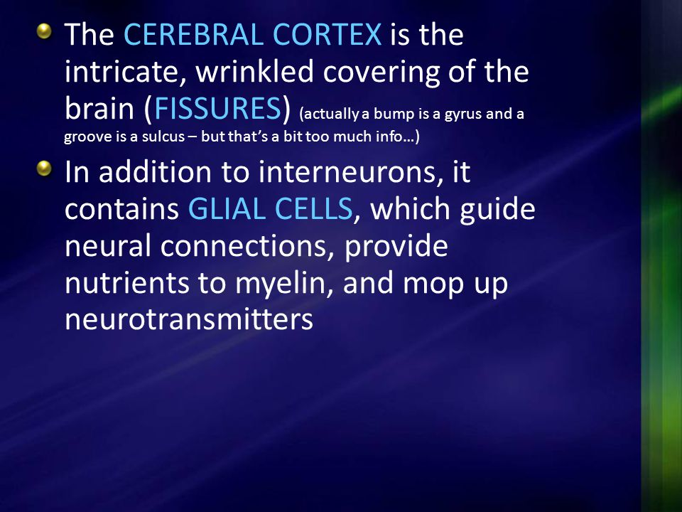 The CEREBRAL CORTEX is the intricate, wrinkled covering of the brain (FISSURES) (actually a bump is a gyrus and a groove is a sulcus – but that's a bit too much info…)