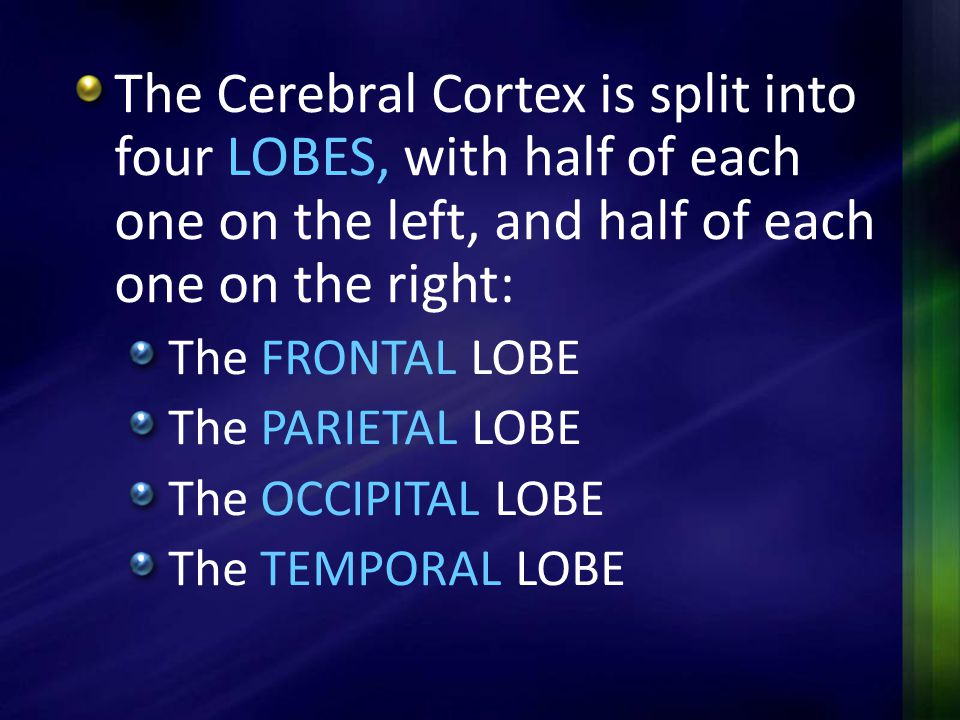 The Cerebral Cortex is split into four LOBES, with half of each one on the left, and half of each one on the right: