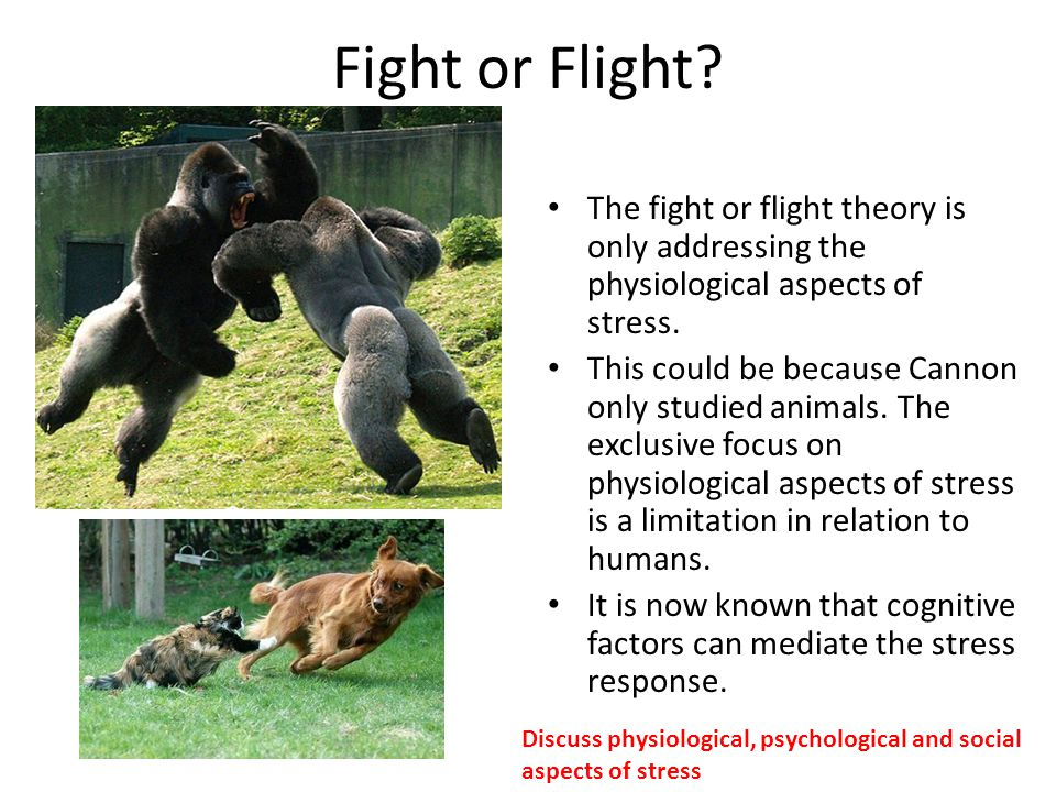 Fight or Flight The fight or flight theory is only addressing the physiological aspects of stress.