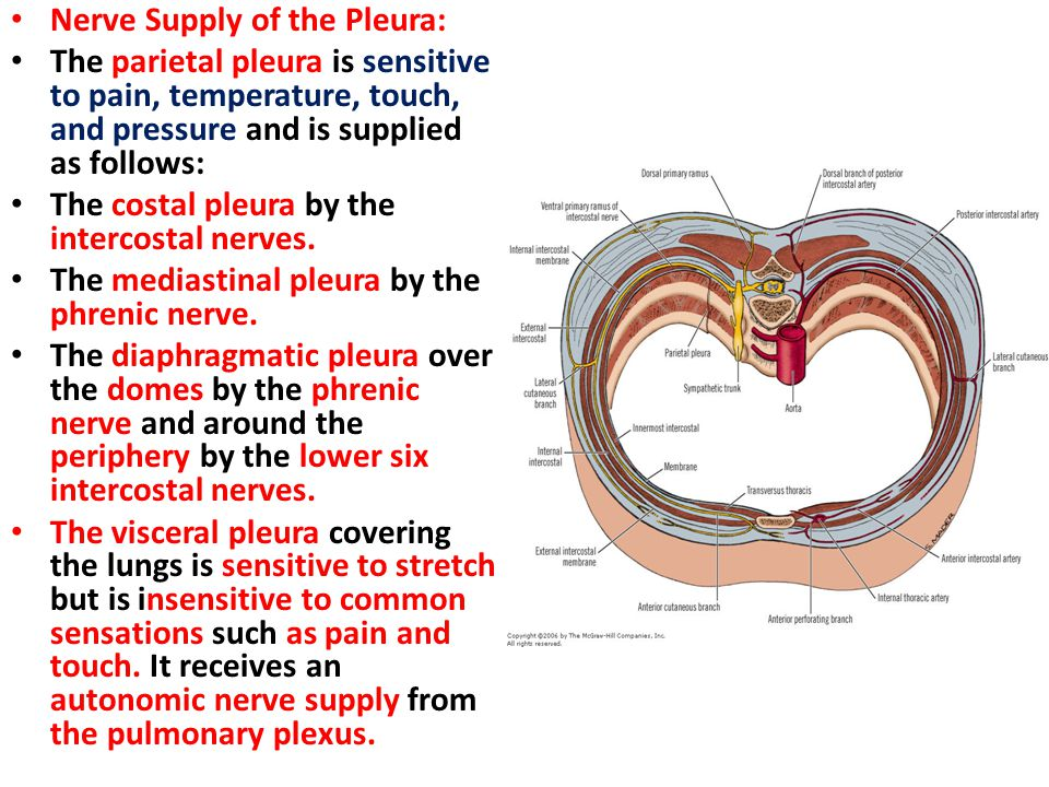 Nerve Supply of the Pleura: