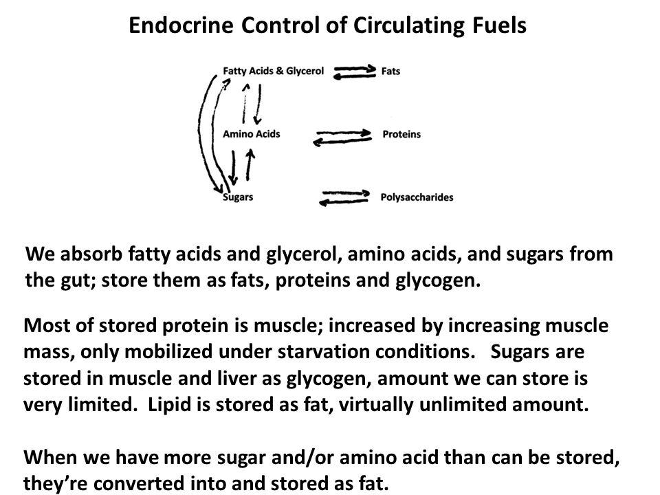 Endocrine Control of Circulating Fuels