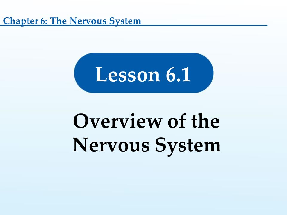 Overview of the Nervous System