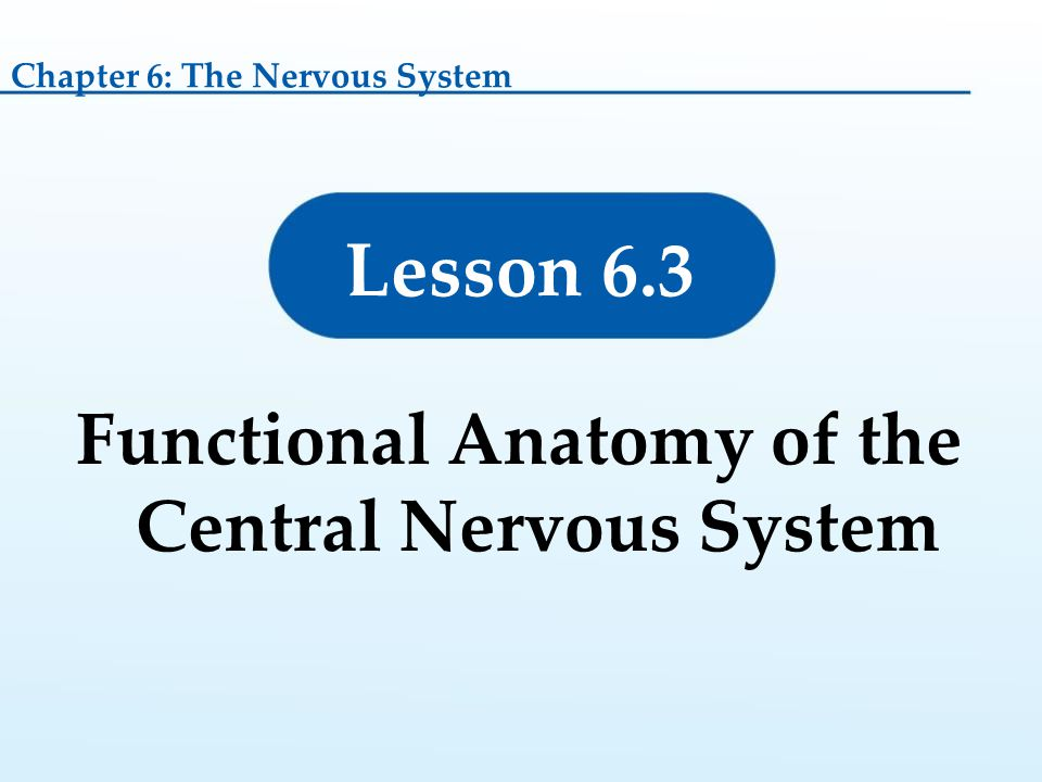 Functional Anatomy of the Central Nervous System