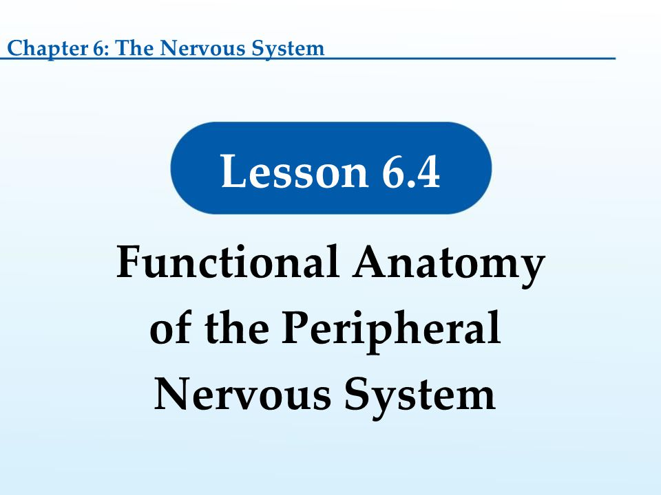 Functional Anatomy of the Peripheral Nervous System