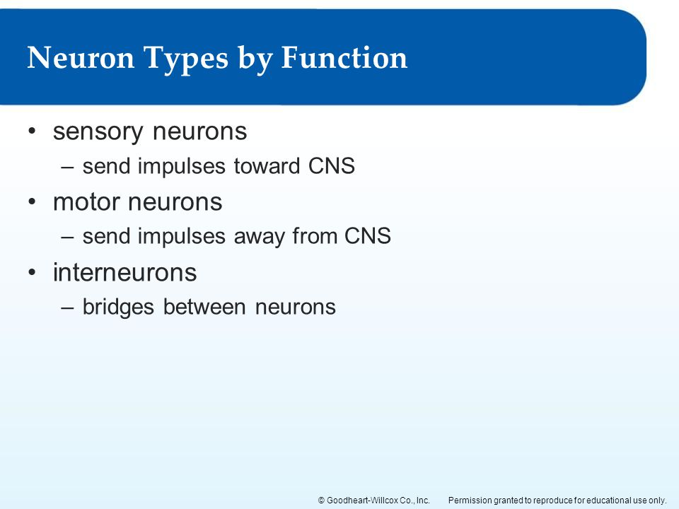 Neuron Types by Function