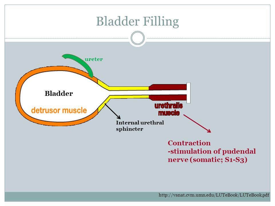 Bladder Filling Bladder Contraction
