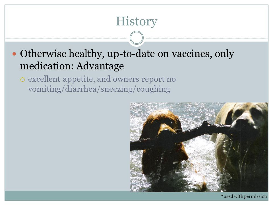 History Otherwise healthy, up-to-date on vaccines, only medication: Advantage.