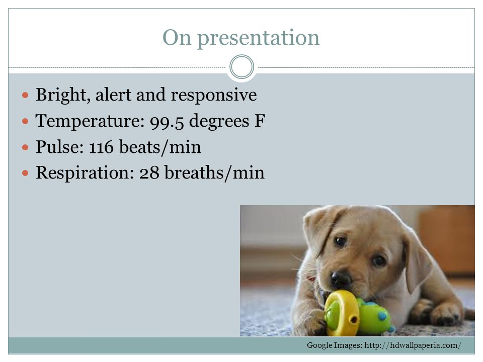 On presentation Bright, alert and responsive