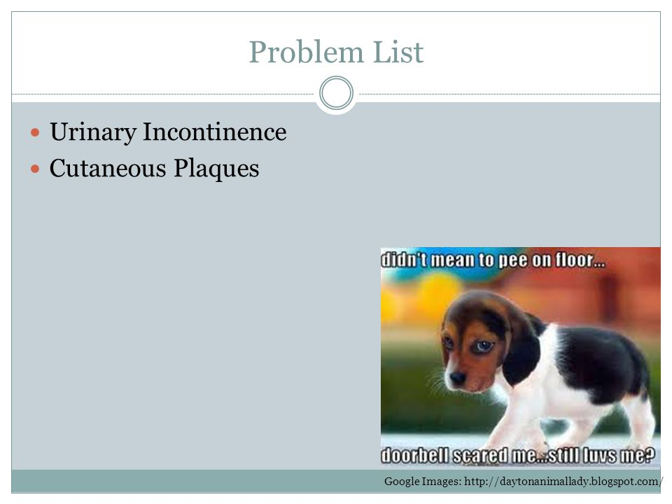Problem List Urinary Incontinence Cutaneous Plaques