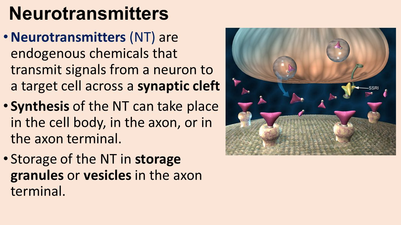 Neurotransmitters Neurotransmitters (NT) are endogenous chemicals that transmit signals from a neuron to a target cell across a synaptic cleft.