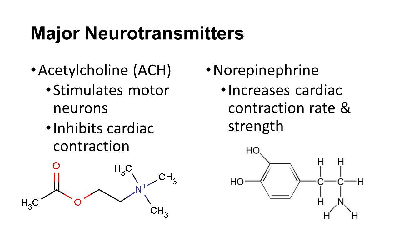 Major Neurotransmitters