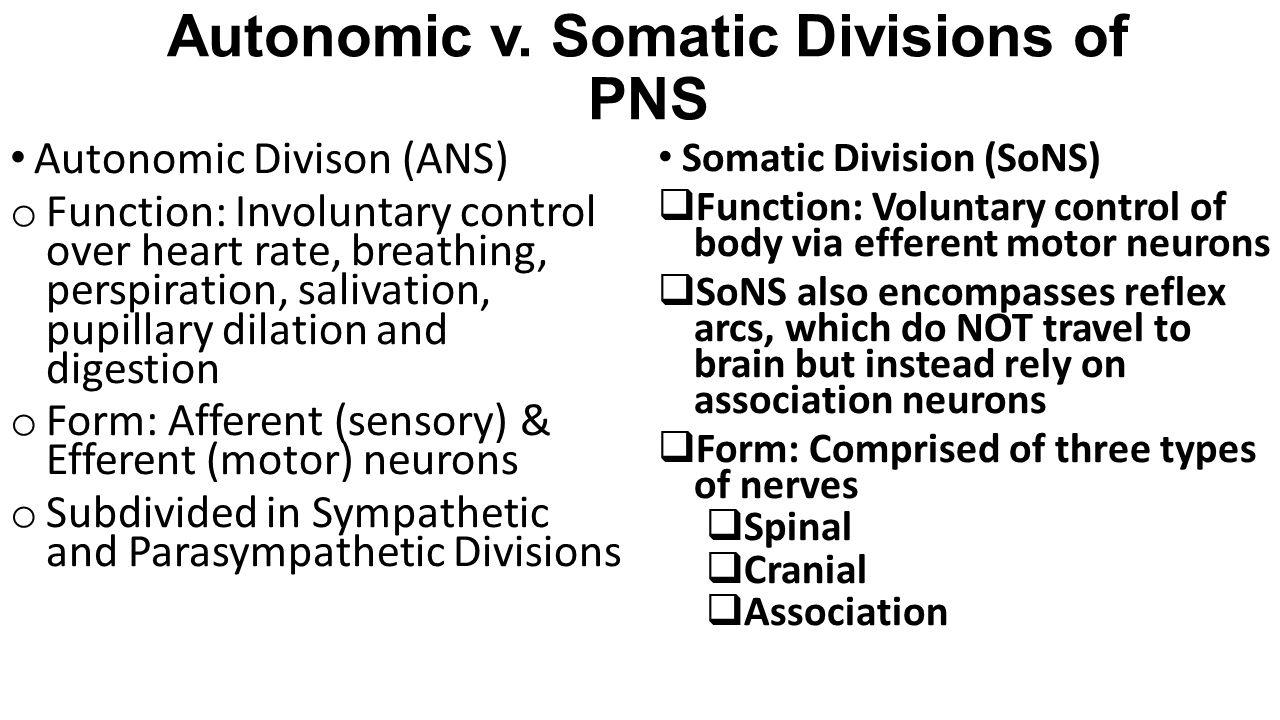 Autonomic v. Somatic Divisions of PNS