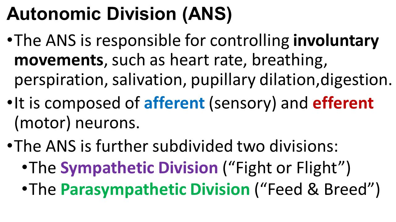 Autonomic Division (ANS)