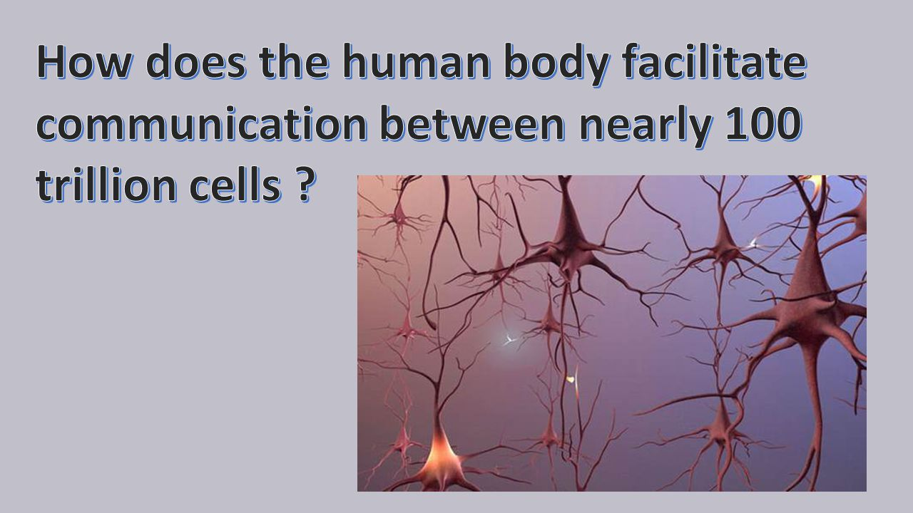 How does the human body facilitate communication between nearly 100 trillion cells