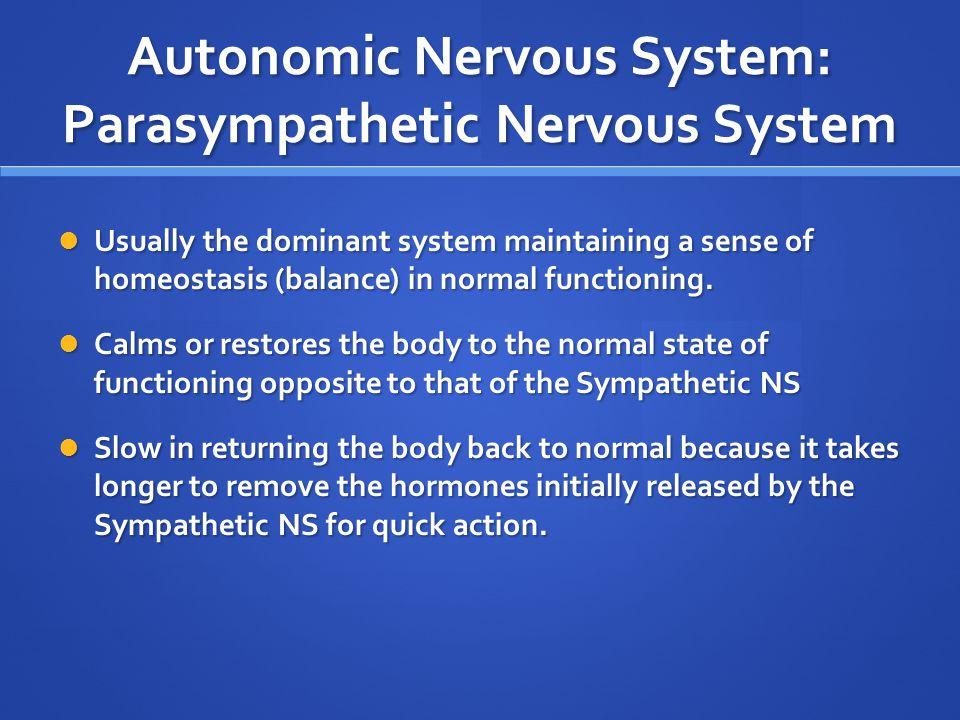Autonomic Nervous System: Parasympathetic Nervous System