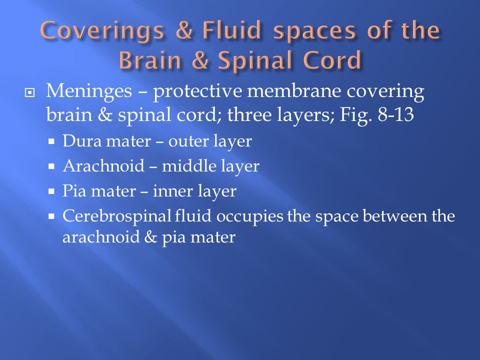 Coverings & Fluid spaces of the Brain & Spinal Cord