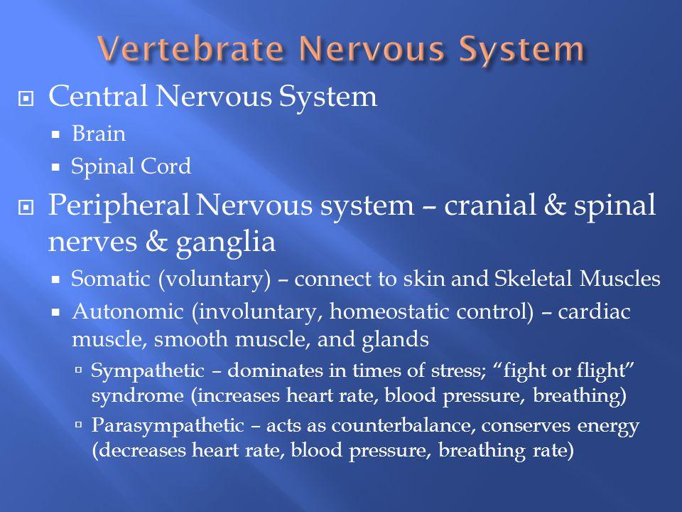 Vertebrate Nervous System