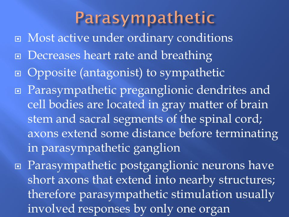 Parasympathetic Most active under ordinary conditions
