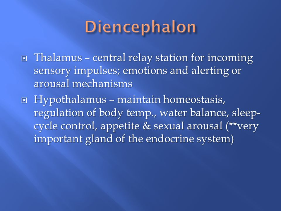 Diencephalon Thalamus – central relay station for incoming sensory impulses; emotions and alerting or arousal mechanisms.