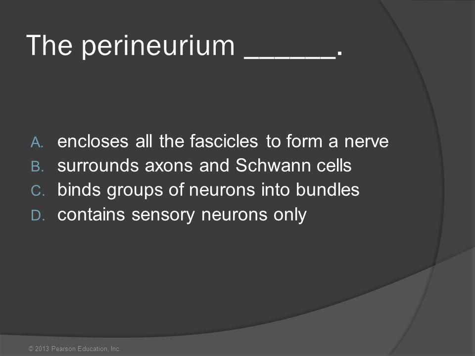 The perineurium ______.