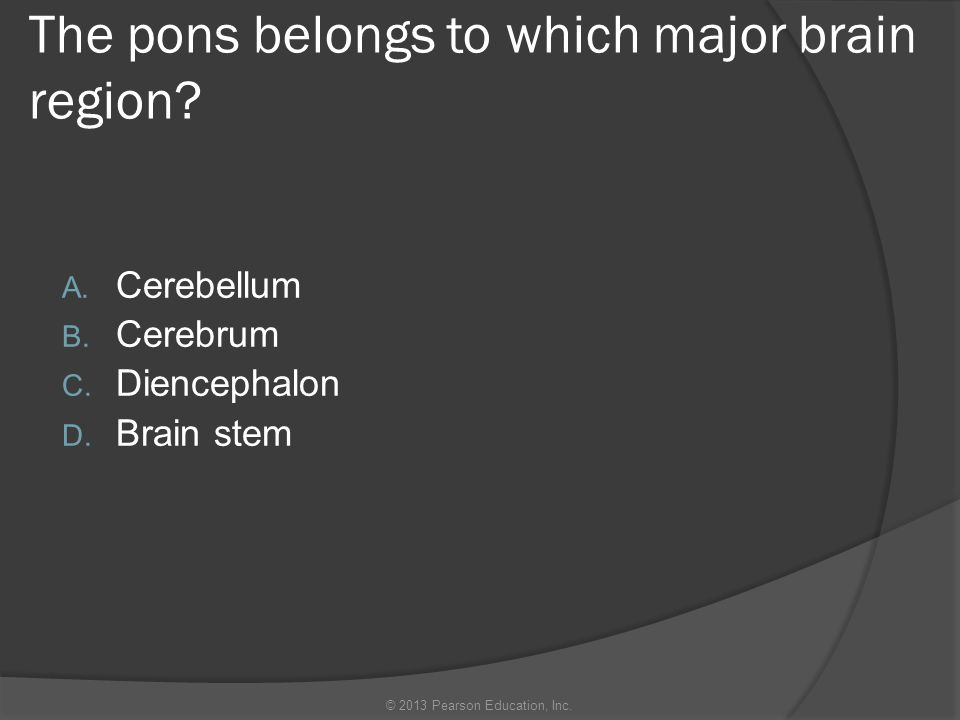 The pons belongs to which major brain region