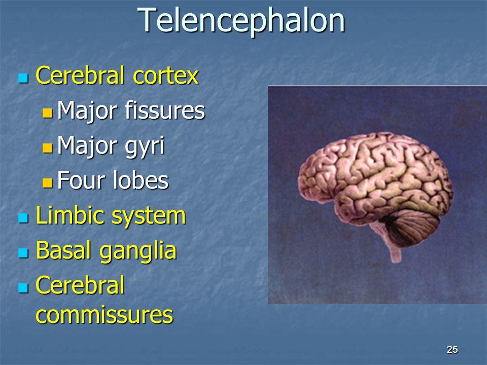 Telencephalon Cerebral cortex Major fissures Major gyri Four lobes