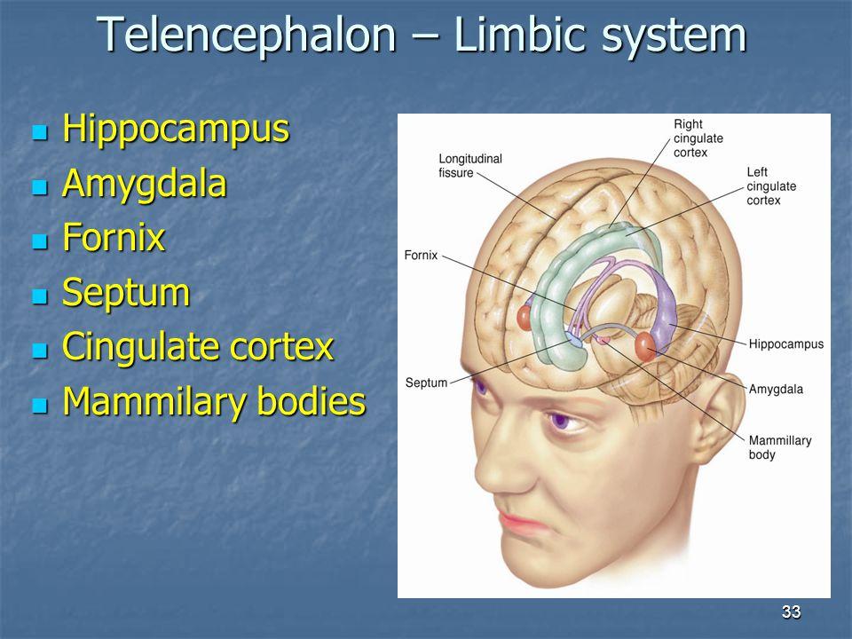 Telencephalon – Limbic system