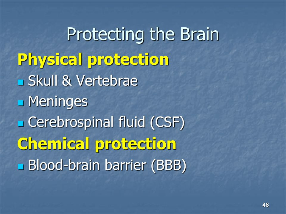 Protecting the Brain Physical protection Chemical protection
