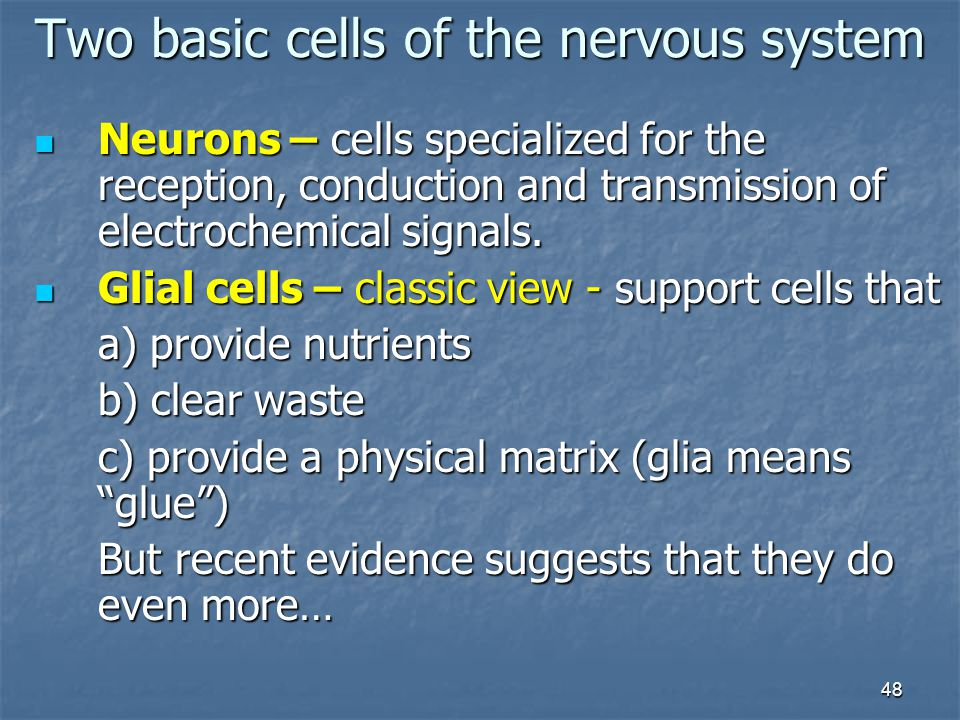 Two basic cells of the nervous system