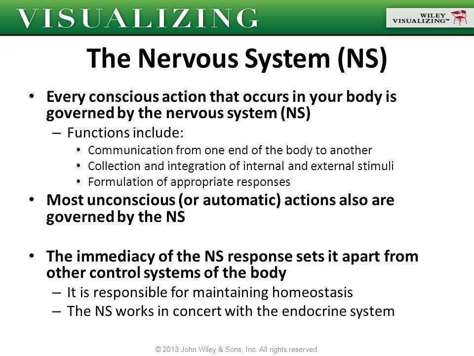 The Nervous System (NS)